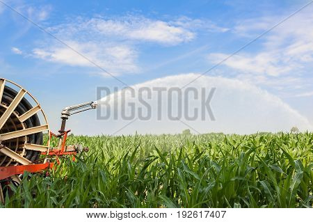 Water Sprinkler Installation In A Field Of Corn.