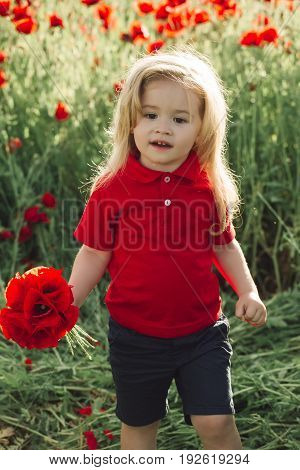 cute little boy on poppy field in hot summer happy child on the meadow with blonde hair hold bouquet mothers day