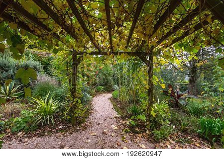 Pergola in the English garden. Autumn. The leaves turned yellow and withered.