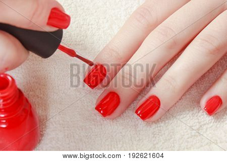Manicure - Beautiful manicured woman's nails with red nail polish on soft white towel. with a bottle of red lacquer