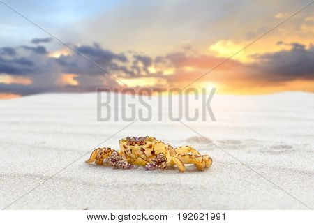 Beach Sand And The Yellow Crab