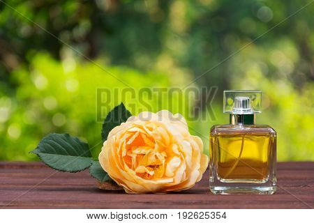 A perfume bottle and a fragrant yellow rose. Natural perfume in a square bottle on a green blurred background. Elixir of fragrant roses
