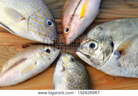 Mix Fresh Fishes From Market