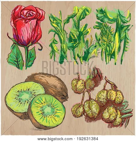 FLOWERS around the World. Collection of an hand drawn vector illustrations. Freehand sketches. Colored line art. Each drawing comprise of a few layers of outlines. Background wood is isolated.