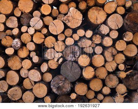 firewood cut and stacked - background or texture