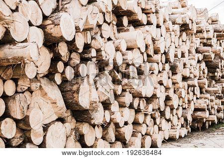Large quantity of wood pine logs with bark