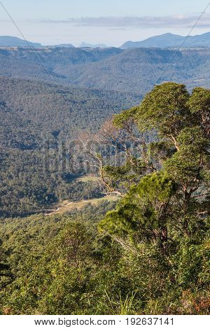 tropical rainforest in Tamborine National Park, Queensland, Australia