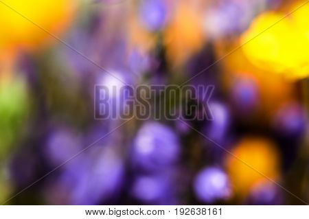 abstract background, yellow and violet flowers out of focus