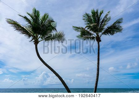 two palm trees blowing in the wind on a tropical beach one hot summer morning