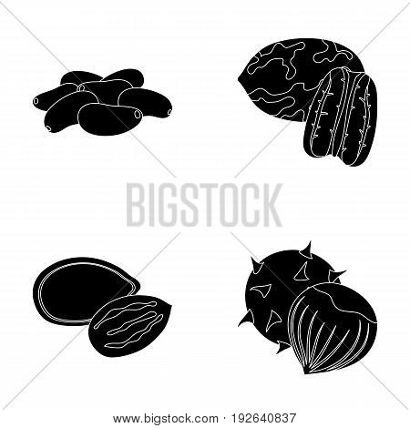 Pecan, pine nut, pumpkin seeds, chestnut.Different kinds of nuts set collection icons in black style vector symbol stock illustration .