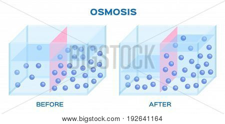 a water molecule osmosis infographic vector .
