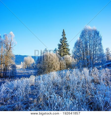 frozen landscape - a beautiful winter frozen landscape - Sumava Czech republic