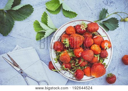 Fresh strawberries in a metal plate on plastered surface top view, toned