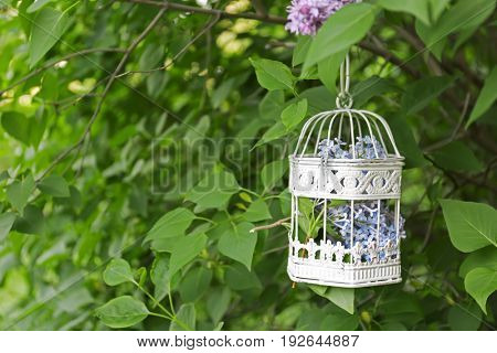 Cage with lilac flowers hanging on bush in garden