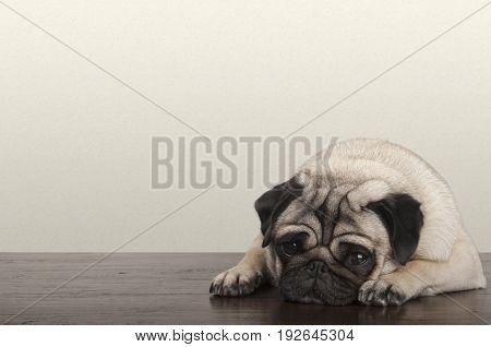 cute little pitiful sad pug puppy dog lying down on wooden floor