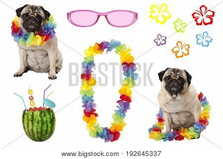 cute pug puppy dog with colorful summer party elements isolated on white background