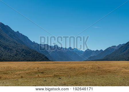 Fiordland National Park New Zealand - March 16 2017: The yellow dry flat lands of Eglinton Flats are a valley among tall dark mountain ranges under blue sky. Forests on slopes.