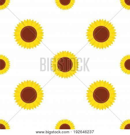 seamless pattern with yellow sunflowers on a white background vector illustration