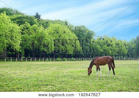 Cute horse grazing on green field