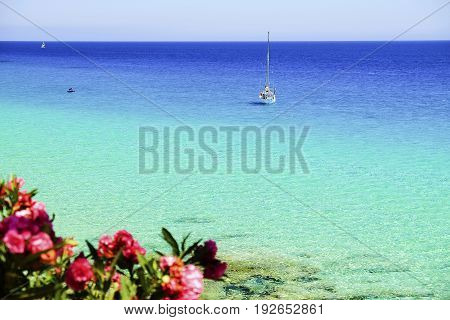 View on the ocean white boat and pink tropical flowers on the Canary Island Fuerteventura Spain.