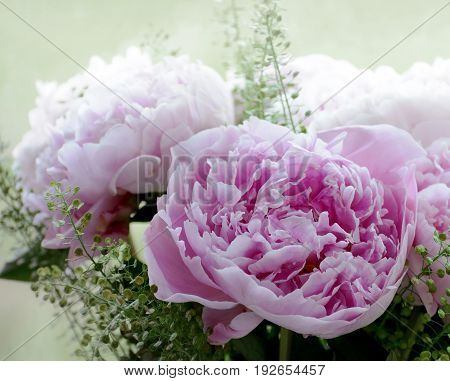 Bouquet of pink peonies in the garden background