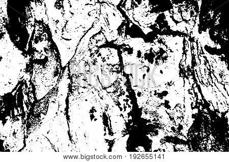 Obsolete tree bark vector texture. Black and white bark ornament. Natural tree peel surface. Rough wood trace. Old tree trunk macro image Oak tree bark pattern. Shabby backdrop or vintage overlay