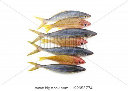 rainbow runner fish with yellowstripe snapper fish isolated on white background