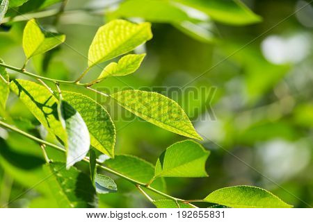 green leaves on the tree in nature