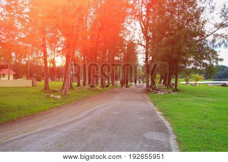 road in the garden with sunset light tone.:Select focus with shallow depth of field
