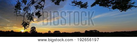 Panorama sunset beautiful colorful landscape and silhouette tree mountain in sky twilight time
