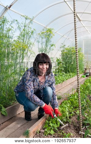 Beautiful Middle-aged Brunette Weeds In A Greenhouse