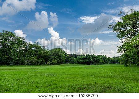 Field grass green trees blue sky nature