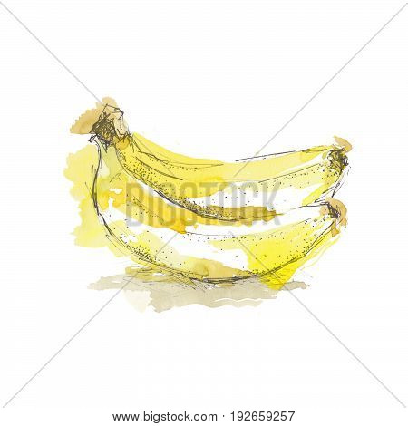 Watercolor sketch of isolated banana on white background.