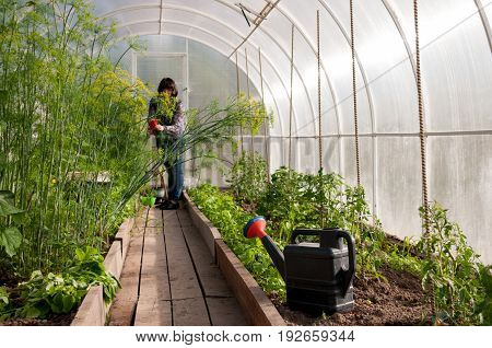 View Of Greenhouse, In Garden A Woman Is Cleaning Greenery