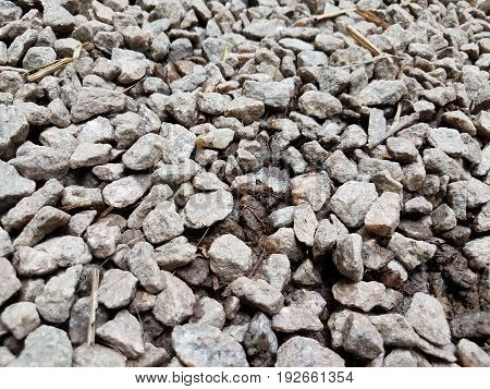 many small grey pebbles or stones on the ground with black ant