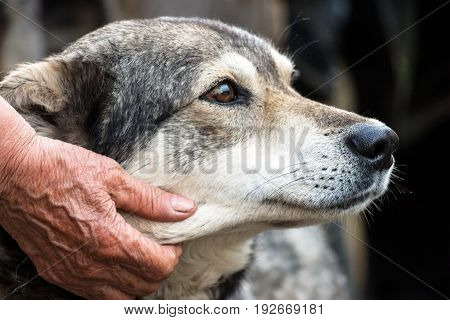 Portrait of a dog mongrel with the hand of the owner. Friendship between dog and man