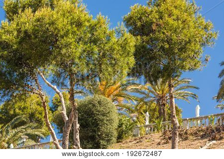 Landscape steep mountain on mediterranean sea with pines and pines on Mallorca in Spain.