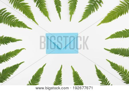 Green leaves frame with blue envelope on white background. Flat lay, top view