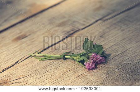 Pink Clover flower on wooden background .