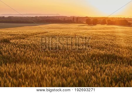 Agricultural field in sunset