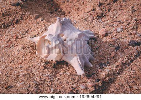 Shellfish on the beach near the Red Sea