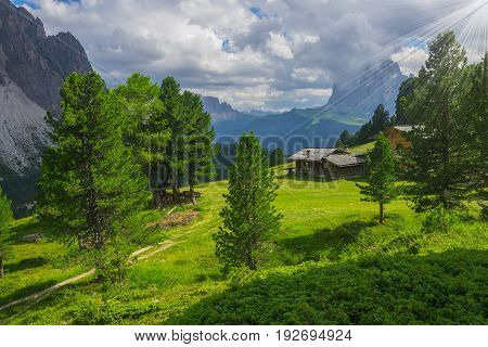 Sunlit picturesque meadow with traditional wooden alpine hut surrounded by spruces Dolomites Italy