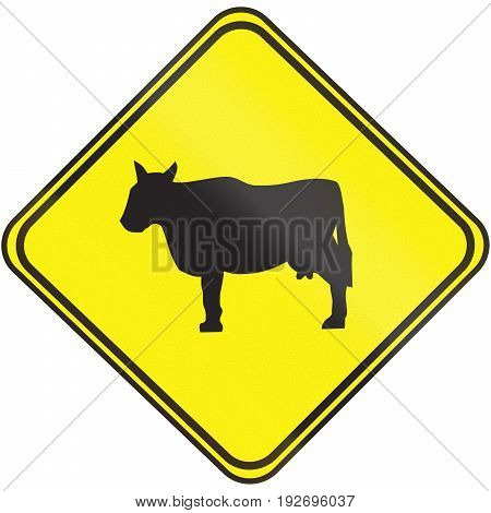 Road Sign Used In Uruguay - Cattle Crossing