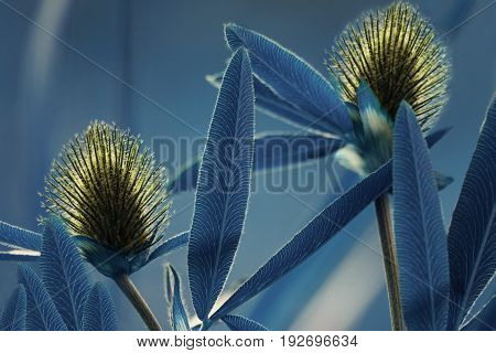 Floral blue background. Wildflowers yellow clover on a bokeh background. Close-up. Soft focus. Nature.