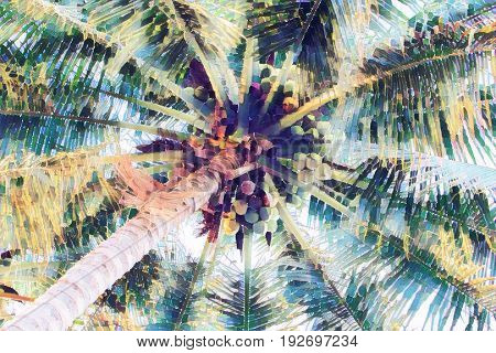 Palm tree crown with coconuts top view from ground. Coco palm leaf faded digital illustration. Tropical vacation background. Coconut fruit on palm tree. Exotic island holiday travel banner or poster