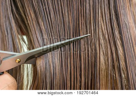 Straight Wet Hair With Comb And Scissors - Hair Care Concept