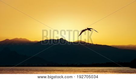 landscape image of high mountains and flying seagull over clear sunset sky in Antalya, Turkey