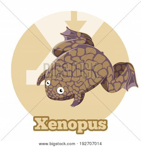 Vector image of the ABC Cartoon Xenopus