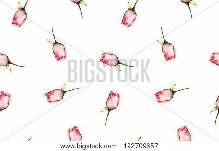 Rosebuds watercolor. Hand-drawn pink flowers with buds on white background. Seamless pattern for Wallpaper, design, decor, clothing, dresses, textiles, paper, greeting cards
