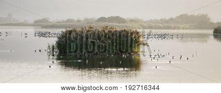Migratory birds resting on Agamon Lake. Israel
